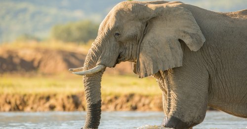 8 Unexpected Uses For Elephant Dung