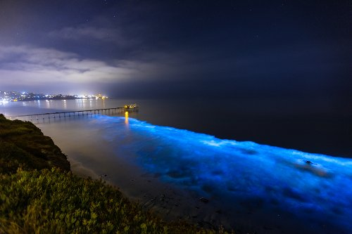 Bioluminescent Waters Glowing Along The Southern California Coast
