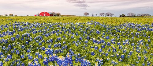 9 Beautiful Spring Wildflower Drives In Texas