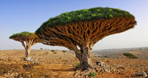 The Lost World Of Socotra: One Of The Most Intriguing Looking Places On The Planet