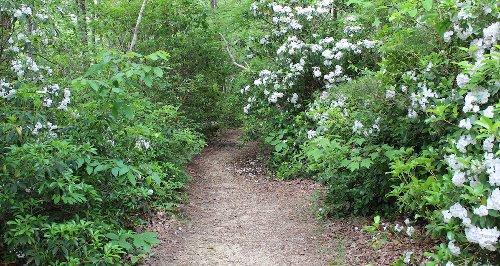 7 Best Wildflower Hikes In Alabama