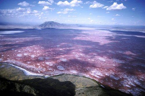 Der säurehaltigste See der Welt, in dem tote Tiere zu Stein werden