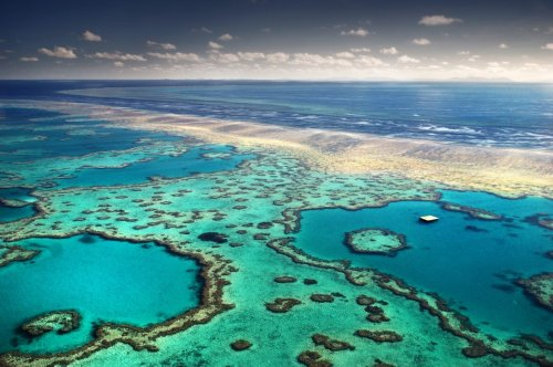 Rekord-Koralle im Great Barrier Reef entdeckt