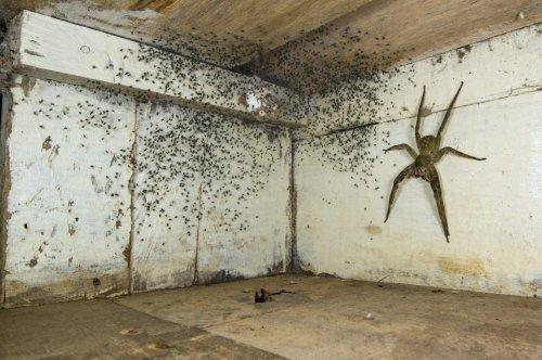 Albtraum-Foto von Riesenspinne unterm Bett erhält Auszeichnung