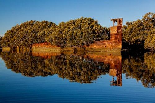 Floating Forest: Sydneys Schiffswrack, auf dem ein Wald wächst