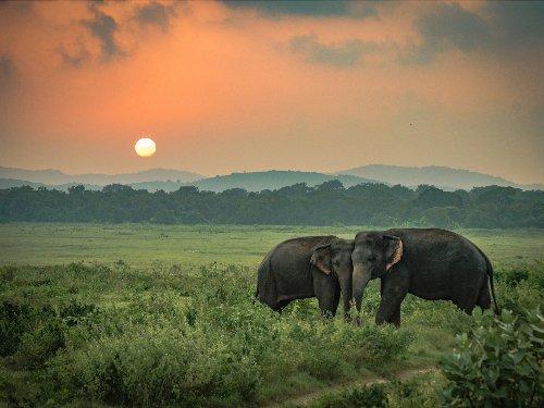 Sri Lanka postpones travel bubble with India