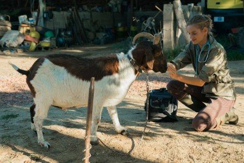'Una veterinaria en la Borgoña': una película de héroes rurales