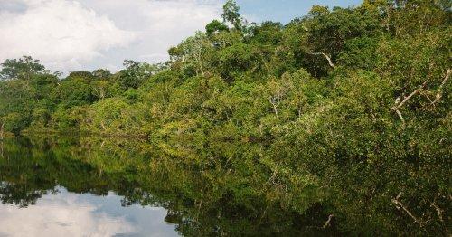 El Amazonas, más en peligro que nunca