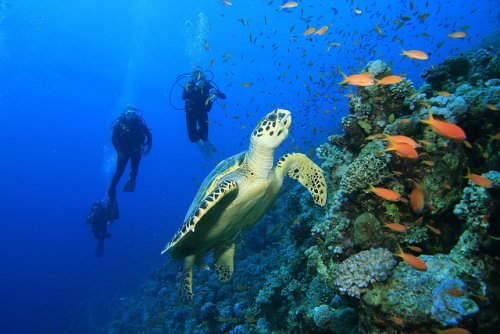 5 Best Places for Scuba Diving in India with photos and cost