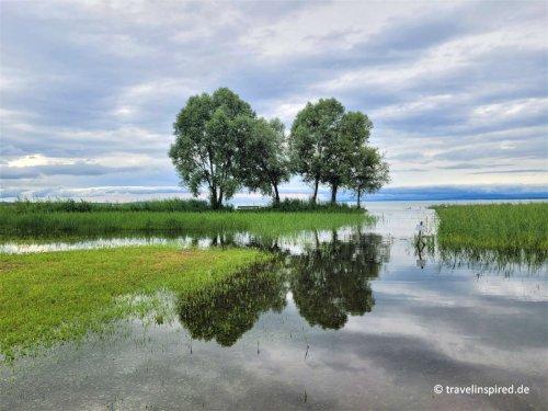 Rheindelta: Vogelbeobachtung am Bodensee