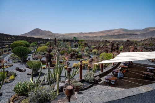 7 Tipps für den Jardín de Cactus auf Lanzarote