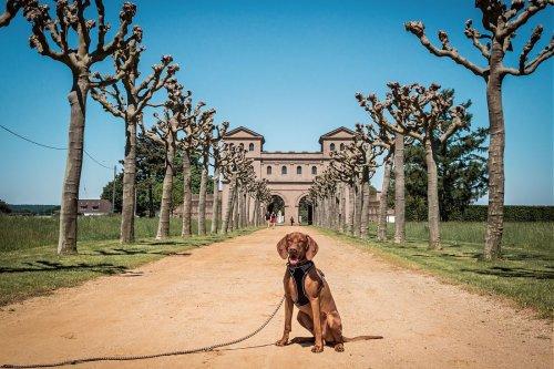 Ausflug mit Hund zum Römerpark Xanten (NRW) - Travel on Toast