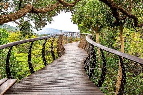6 Mind-Blowing Canopy Walks Around the World
