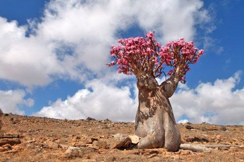 20 Amazing Desert Plants and Where to Spot Them Around the World
