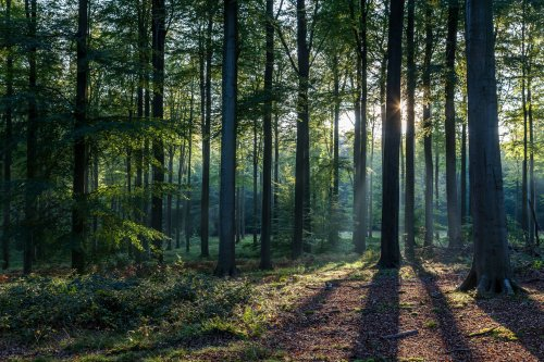 Woods vs. Forest: What's the Difference?