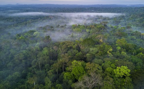 The 10 Largest Forests in the World