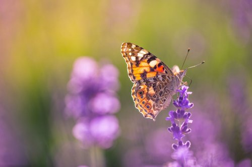 How I Attract Butterflies In My Garden