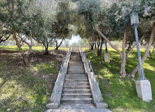 Los Angeles to Breathe New Life into Historic Olive Grove