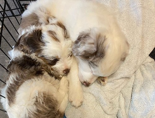 Rescued Blind and Deaf Puppies Are Incredibly Joyful