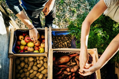 Food Sovereignty: Definition, Principles, and Importance