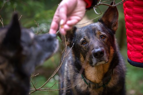 Your Dog Gets Jealous Just Imagining You With Another Canine, Study Finds