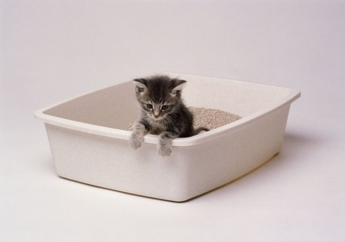 The 6 Best Eco-Friendly Cat Litters of 2021