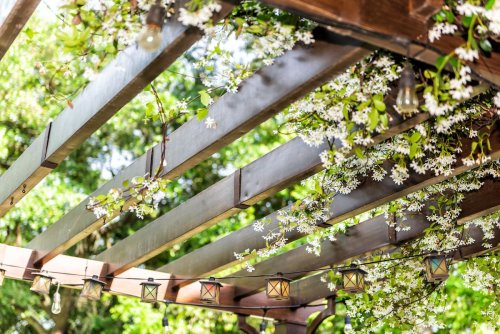 Plants to Seamlessly Integrate a Pergola Into Your Garden