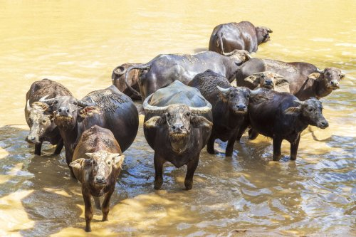 11 Wild Wetland Animals