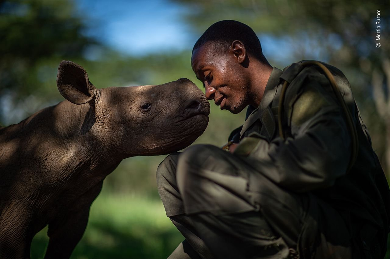 Wildlife Photographer of the Year winners will take your breath away