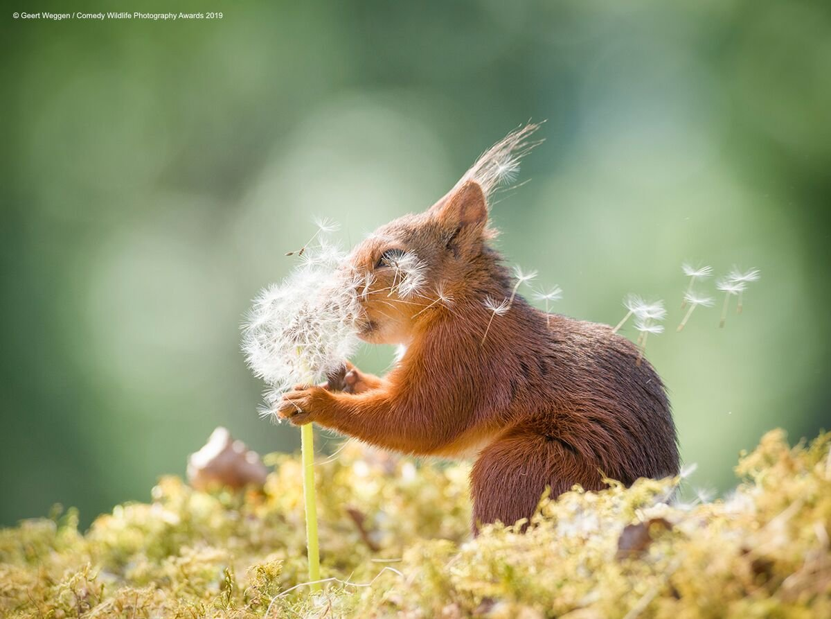 These wildlife photos are all about the belly laugh