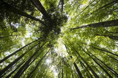 What Is Deep Ecology? Philosophy, Principles, Criticism