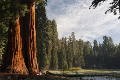 Land of Giants: 10 Facts About Sequoia National Park