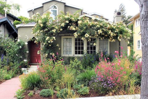 Why Choose Native Plants for Your Garden?