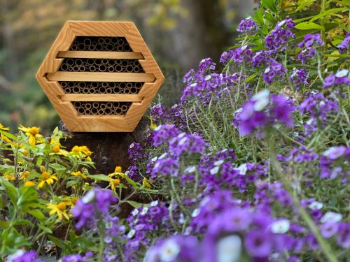 Group Is Giving Away Hundreds of Homes for Native Bees