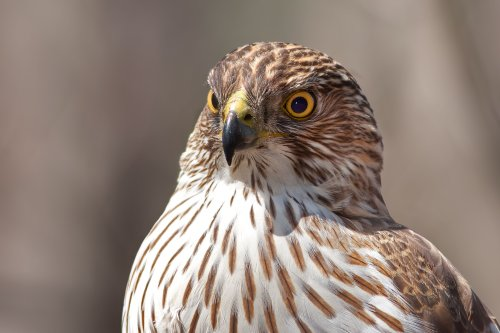 18 Magnificent Types of Hawks and Where to Find Them