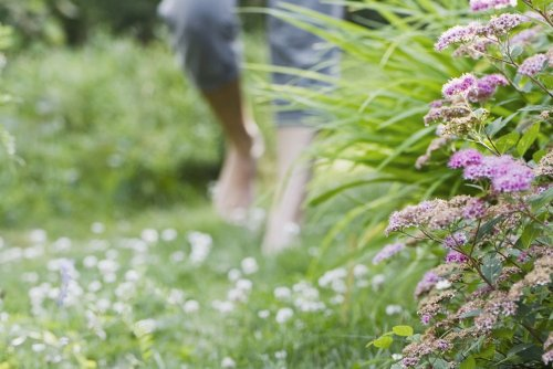 Planting Ideas for Garden Paths and Walkways