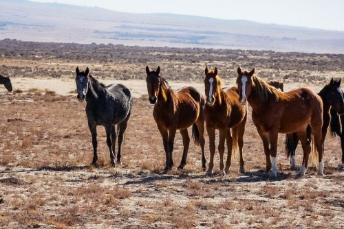 Katherine Heigl Joins Effort to Save Utah's Famous Herd of Wild Horses