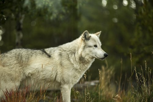 What Is Rewilding? A Complete Overview of Conservation Biology