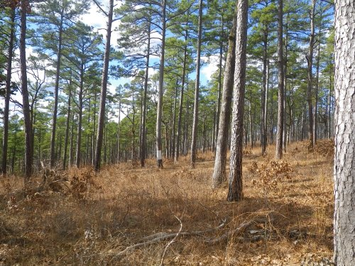 USFS scientist: Climate change demands silviculture focused on resilience, restoration