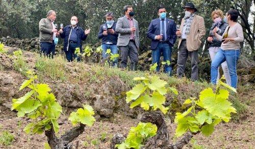 Convenio para continuar con la apuesta por los vinos de la DOP Cebreros