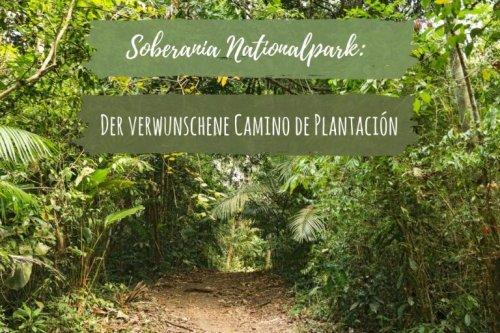 Soberania Nationalpark: Der verwunschene Camino de Plantación