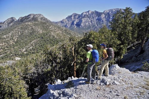 Toiyabe National Forest: The Complete Guide