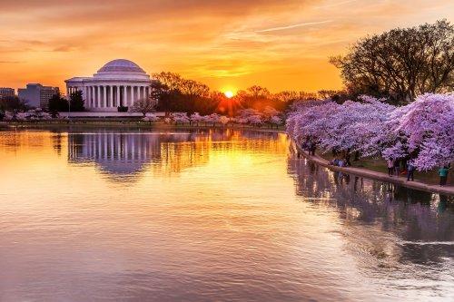The Best Ways to Enjoy the Washington, D.C. Cherry Blossom Festival
