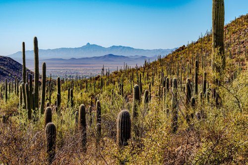 Saguaro National Park: The Complete Guide