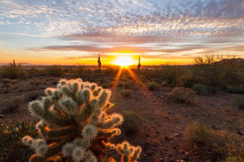 Lost Dutchman State Park: The Complete Guide