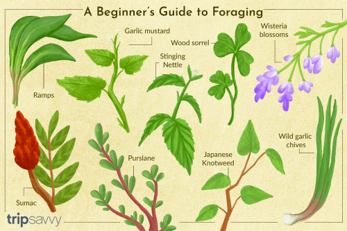 Dive Into Foraging With These 10 Delicious Wild U.S. Plants