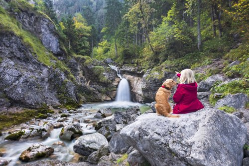 Everything to Know About Hiking With Your Dog