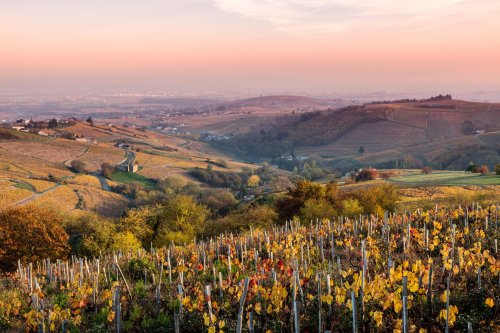 Your Guide to France's Wine Regions, From Bordeaux to Burgundy