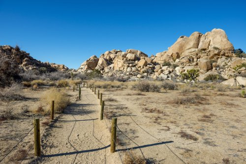 The 10 Best Hikes In Joshua Tree National Park