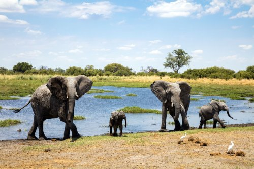 The 9 Best African Safari Tours of 2021